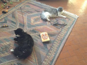 Kitties on the rug
